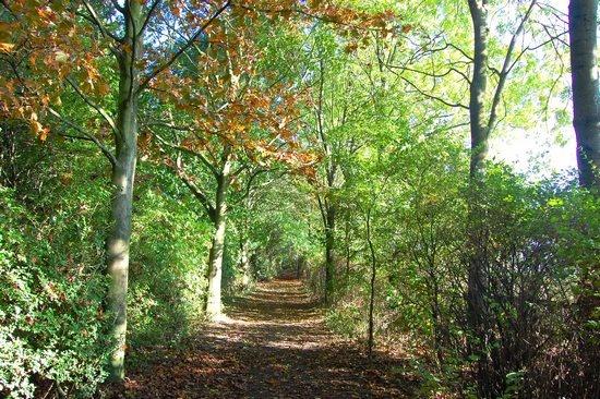 Autumn Walk by morga