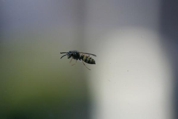 Curious Bee by Jimbotha