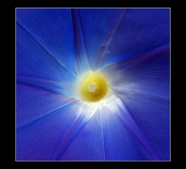 Blue star by hgabi