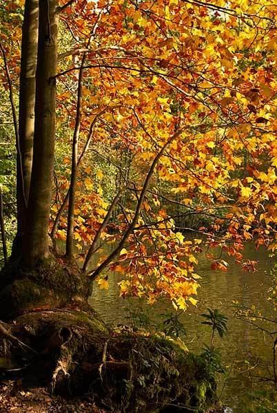 Wakehurst Colours by rnomis