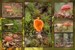 Fungi Collection