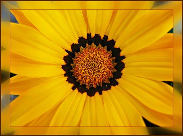 Rays of Sunshine by sandrish