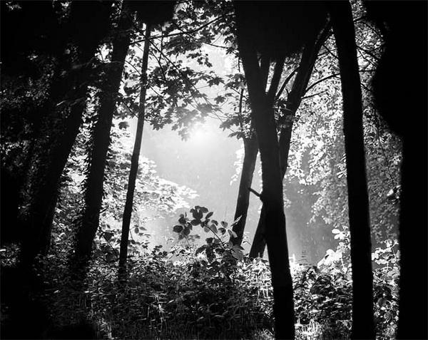 Light by buckleyi