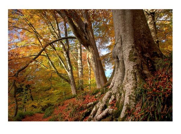 Autumn Hues by xinia
