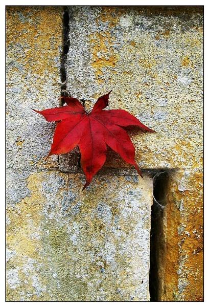 Leaf Motif by davidhu