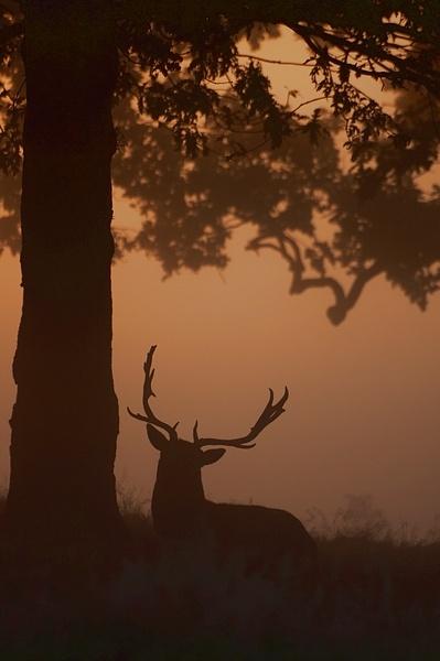 Misty morning Deer by SteveAngel