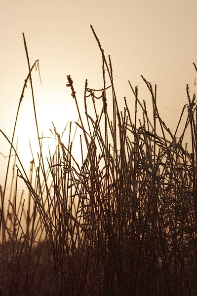 Frozen Grass by SteveAngel