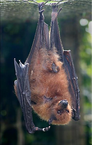 Batty! by mutley68