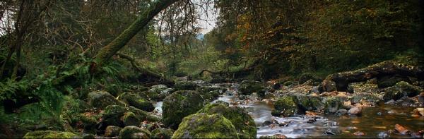 Campsie Glen by becca_cusworth