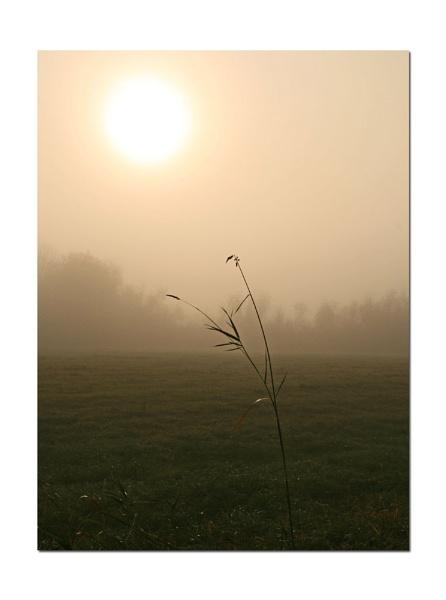 Misty  Morning by mommy2cutekids