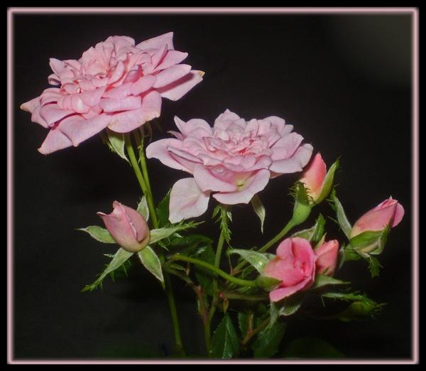 pretty in pastel by CarolG