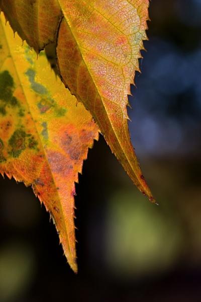 A little fall by Monradus