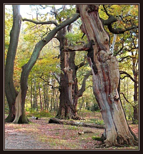 Treebeard Conversation by Sylviwhalley