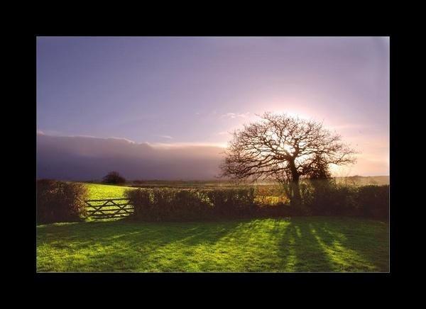 Halo Tree by tavm