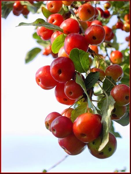 Autumn fruit by helenlinda