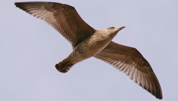In flight by jcf