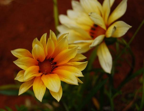 Bright yellow by Lindaephotozine
