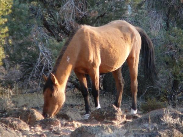 Wild horses 2 by julz555