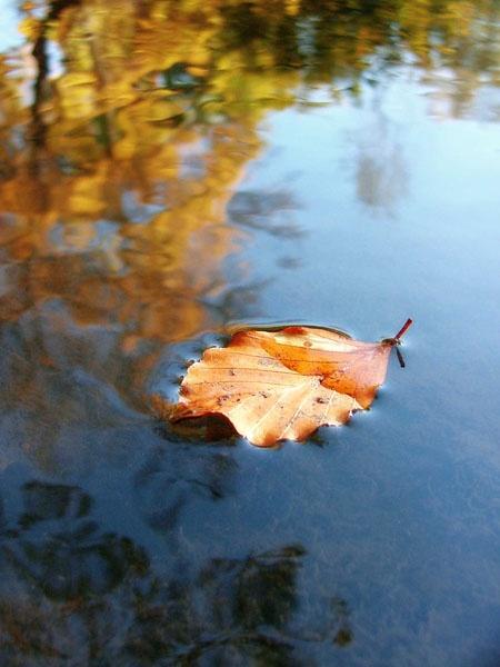 Autumn water by rachepix