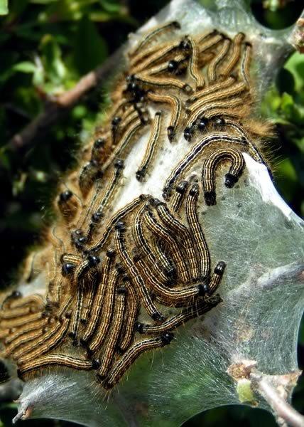 Caterpillar Jigsaw by ChesterT