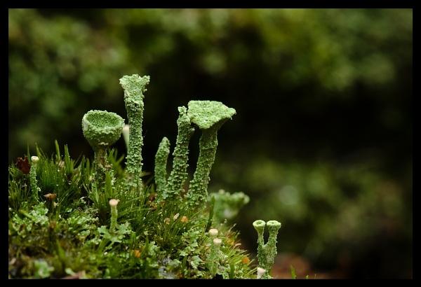 Lichen by shaun