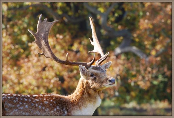 King of the Antlers by Vee_Enn