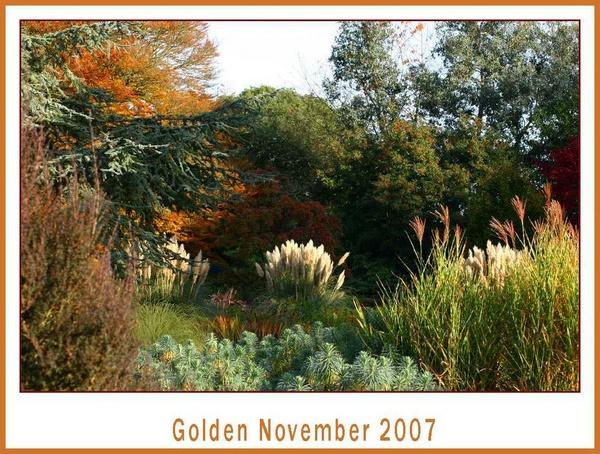 Golden November by daringdaphne