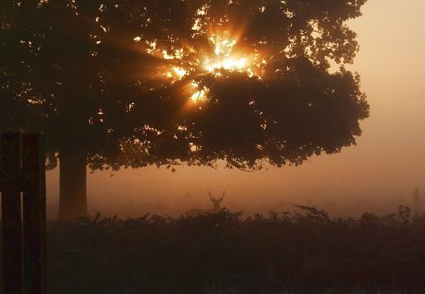 Sunny Deer by SteveAngel