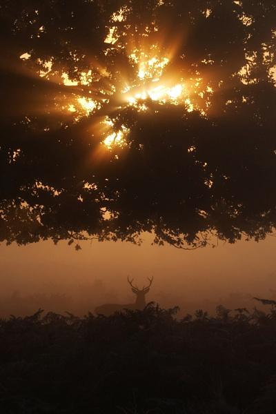 Tree star Deer by SteveAngel