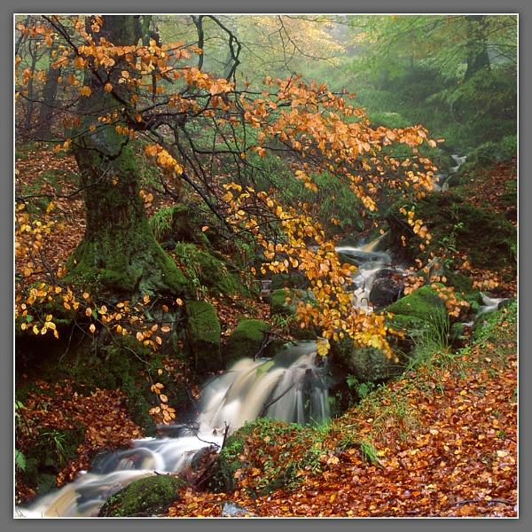 Cruagh Woods by Ganto