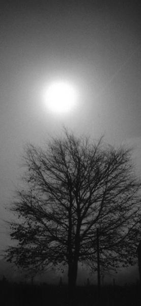 moonlit by tommermmv