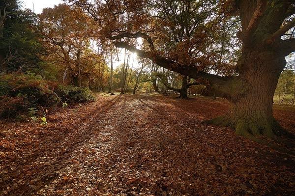 Woodland Path by BillM