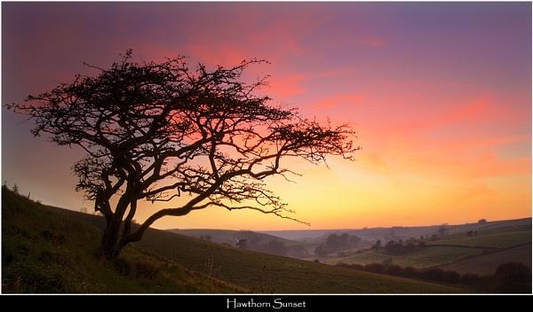 Hawthorn Sunset by Kris_Dutson