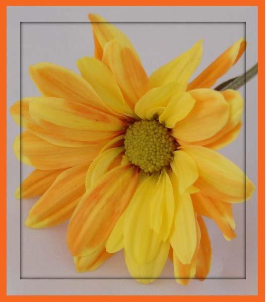 Orangegina 2 by madusa1