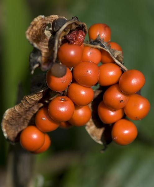 Autumn Fruits by mavericke