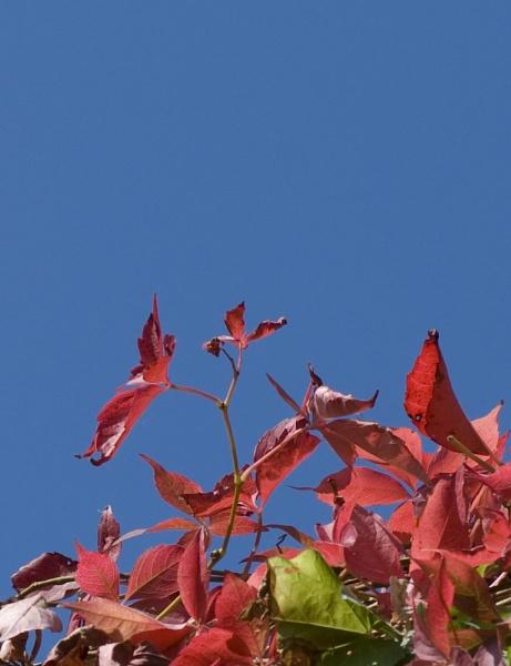 Autumn Colours by mavericke