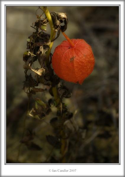 autumn light by magicaxeman