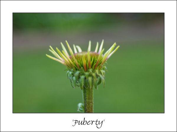 Puberty by Acoustics4me