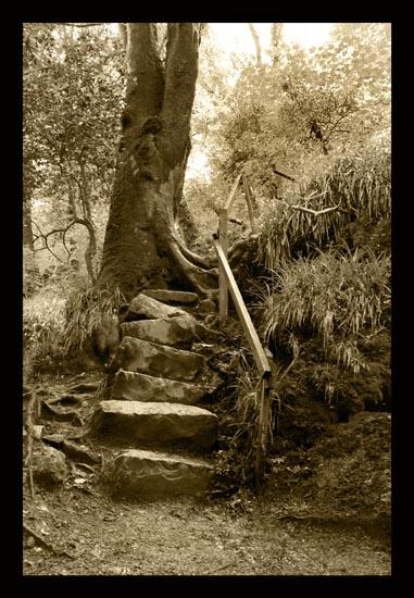 Woodland Steps by cider