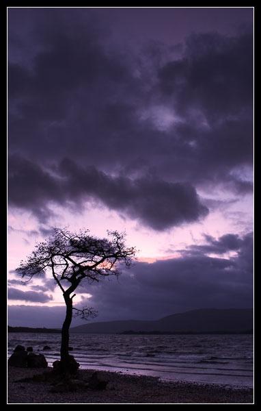 Conrads tree by webjam