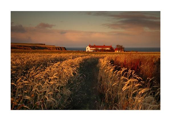 Winter Barley by xinia