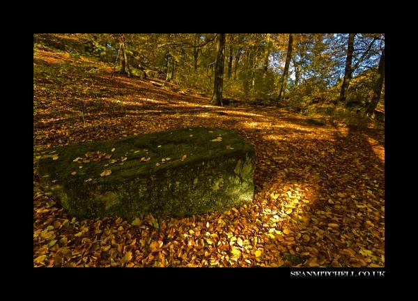 Shadows & Light by wamp