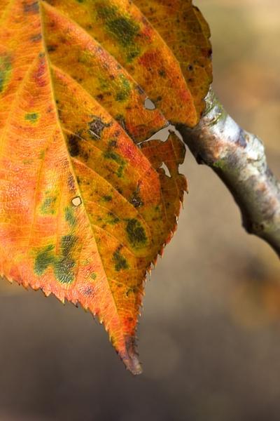 Autumn colours by Monradus