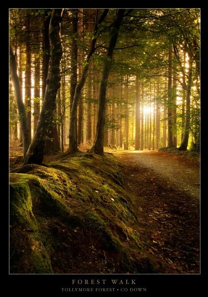 Forest Walk by Codiac