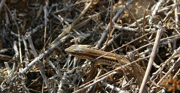 Little Lizard by Jennie277
