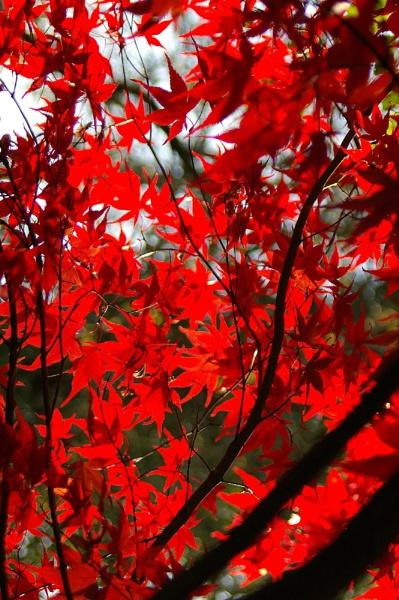 Autumn Colours II by theeyesoftheblind