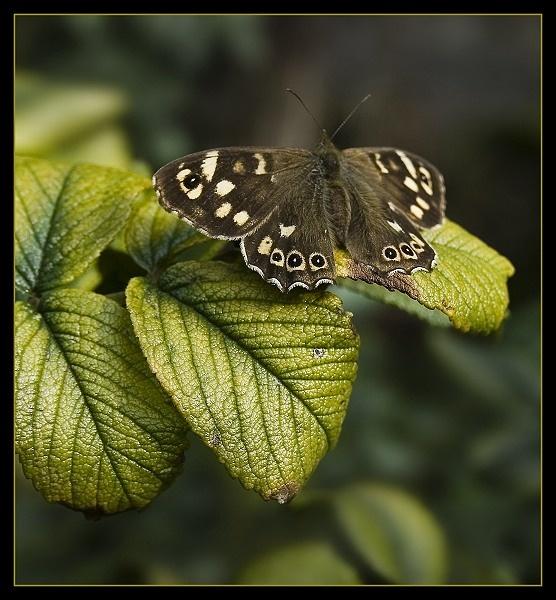 Resting on a Leaf by AliMurray