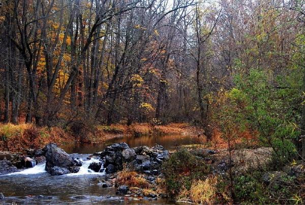 Golden Pond by Rainy