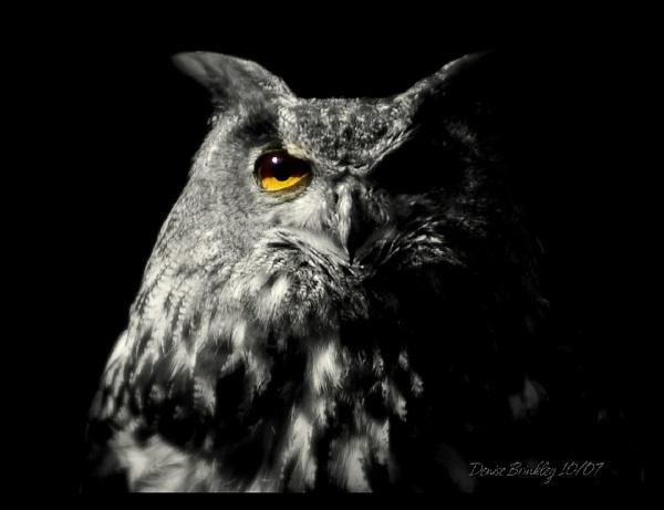Golden Eye by denbink