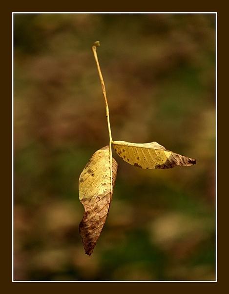 Falling leaf by hgabi